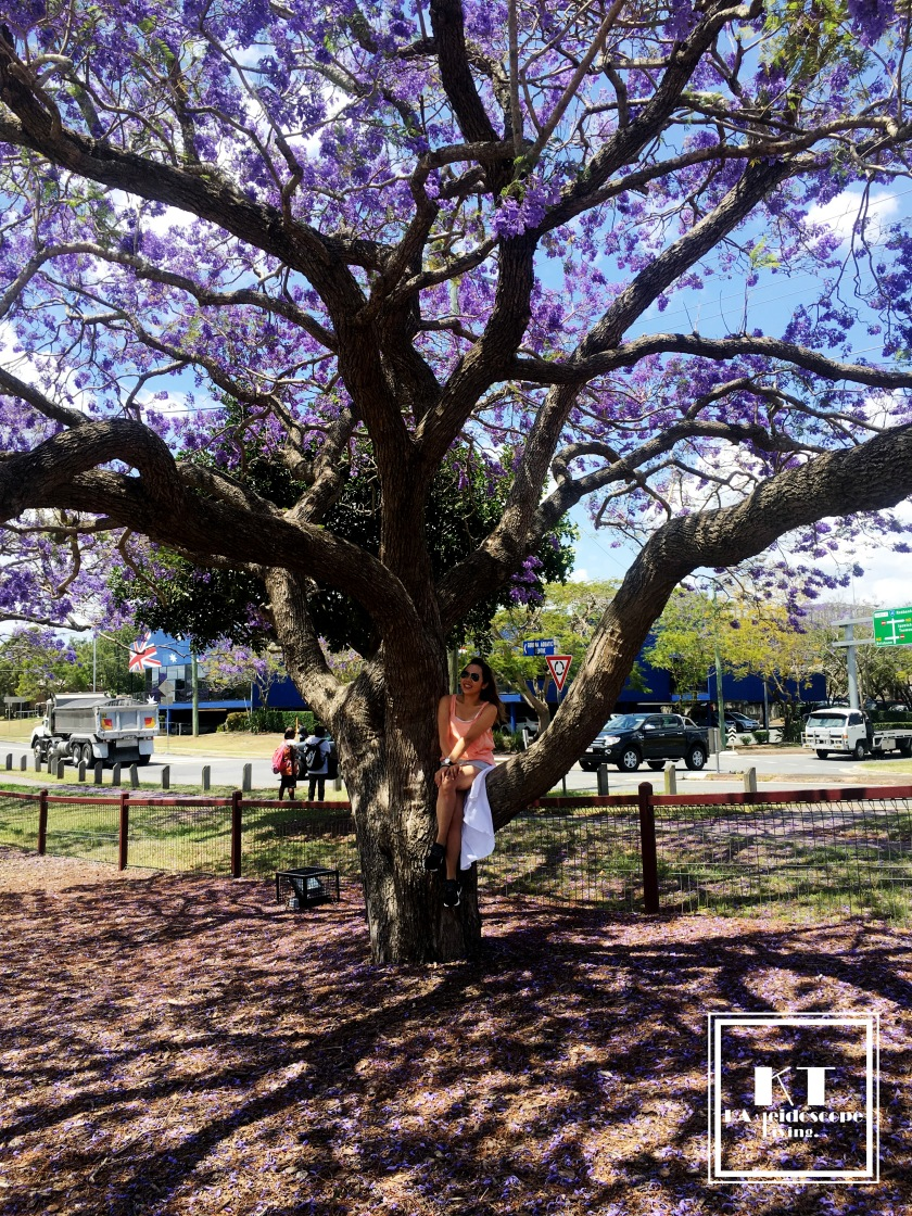 Bucket List Must Go Australia Brisbane Ipswich Goodna Jacaranda Festival Purple 02