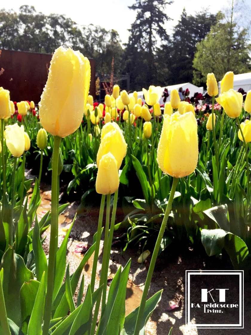 Bucket List Must Do Melbourne Tesselaar Tulip Festival 02