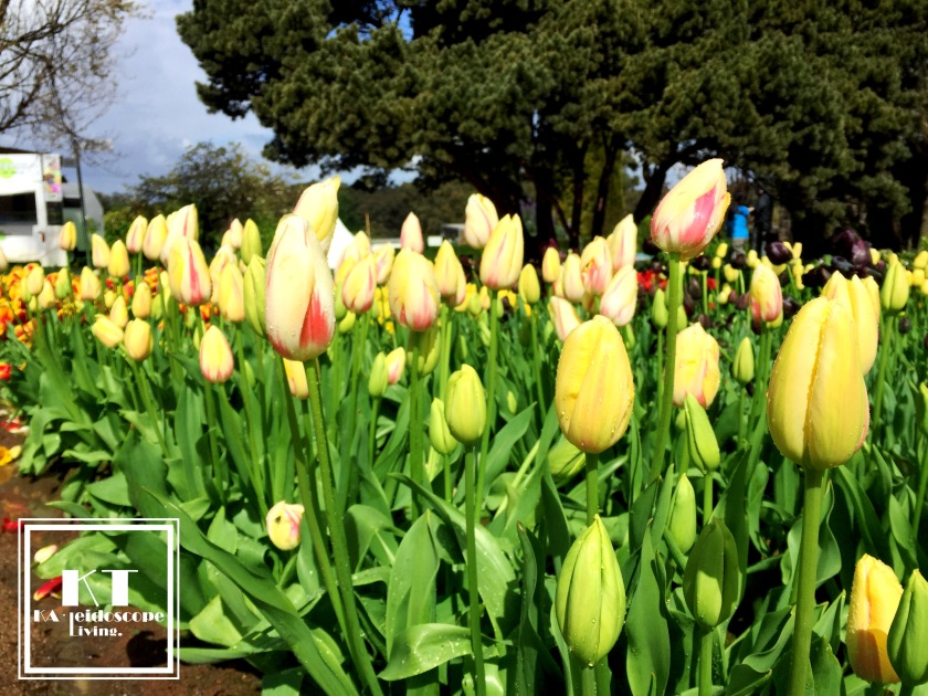 Bucket List Must Do Melbourne Tesselaar Tulip Festival 03