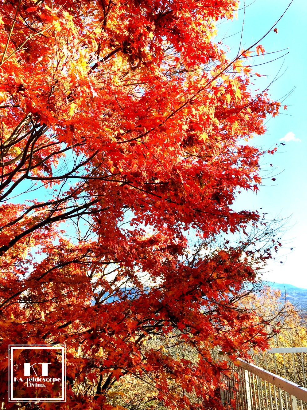Travel Must Visit Mount Fuji Maple Leaves Lookout Japan 03