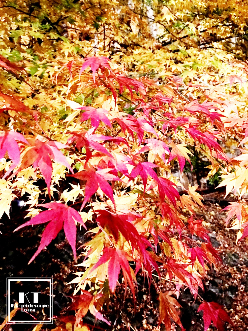 Travel Must Visit Mount Fuji Maple Leaves Tunnel Yamanashi Japan 02