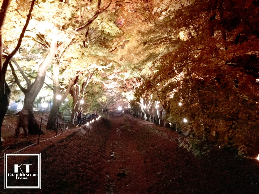 Travel Must Visit Mount Fuji Maple Leaves Tunnel Yamanashi Japan 03