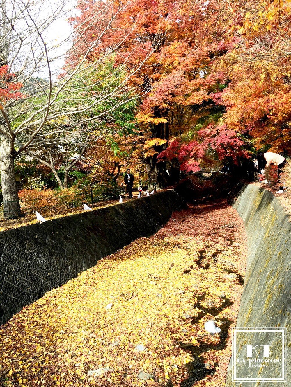 Travel Must Visit Mount Fuji Maple Leaves Tunnel Yamanashi Japan 05