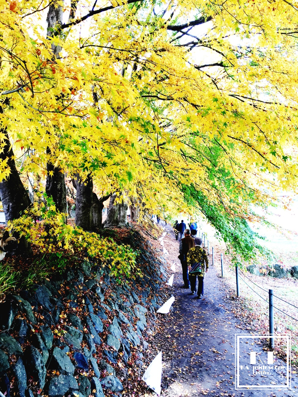Travel Must Visit Mount Fuji Maple Leaves Tunnel Yamanashi Japan 06