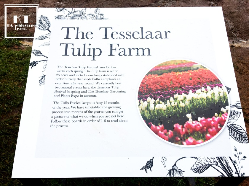 Bucket List Must Do Melbourne Tesselaar Tulip Festival 14