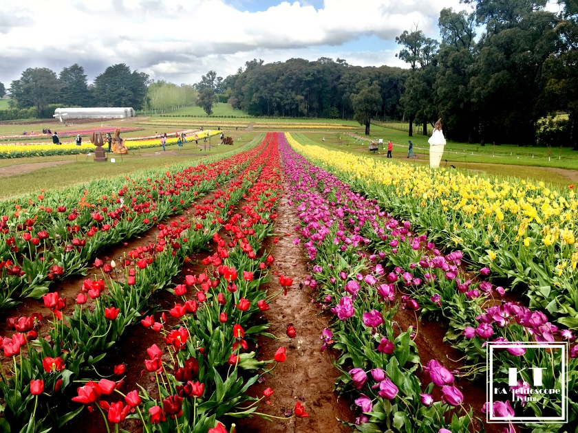 Bucket List Must Do Melbourne Tesselaar Tulip Festival 16