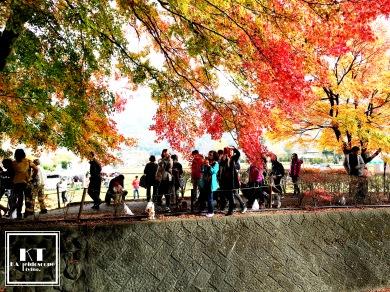 Travel Japan Yamanashi Kawaguchiko Fuji Five Lakes Momiji Tunnel 日本 山梨 河口湖紅葉トンネル 回廊