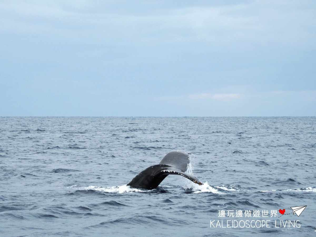 Whale Watching in Okinawa during Winter – Departing from Onna