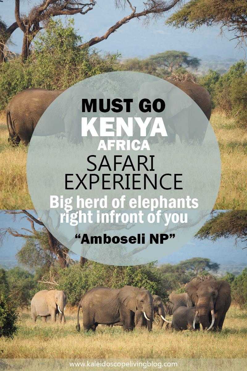 Safari Experience in Amboseli National Park of Kenya with the View of Mount Kilimanjaro
