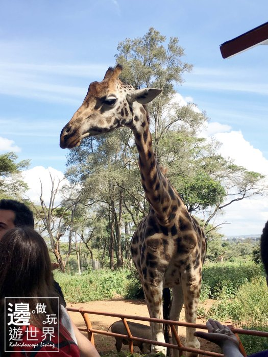 Must Do Travel Africa Kenya Nairobi Giraffe Center