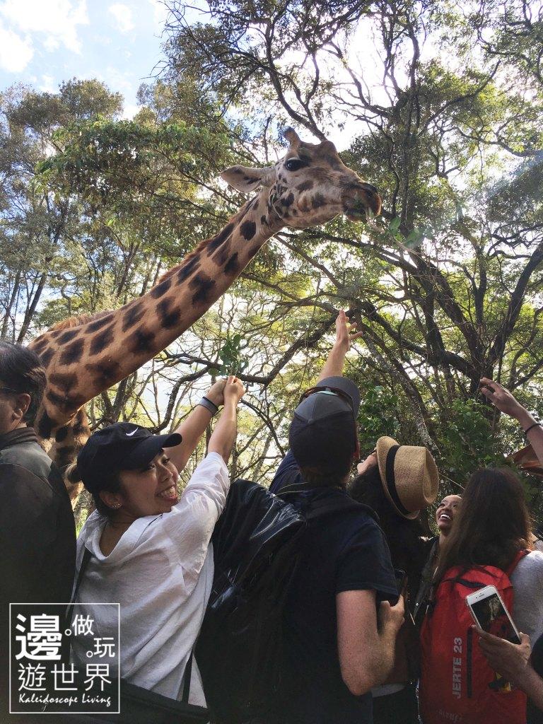 Must Do Travel Africa Kenya Nairobi Giraffe Center