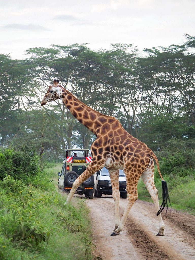 Kenya Safari Must Visit Lake Nakuru National Park 非洲肯亞