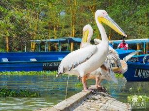 Travel Kenya Lake Naivasha Crescent Island Game Sanctuary 肯亞奈瓦沙湖