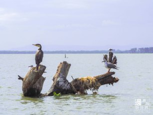 Travel Kenya Lake Naivasha Crescent Island Game Sanctuary 肯亞奈瓦沙湖