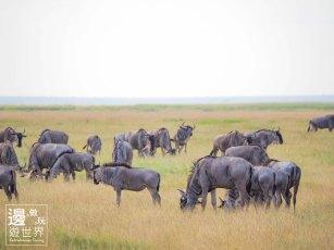 Must Travel Kenya Safari Holiday in Amboseli National Park with Mount Kilimanjaro Masai Wildbeest