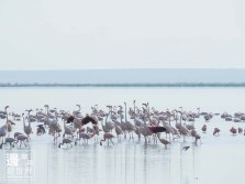 Must Travel Kenya Safari Holiday in Amboseli National Park with Mount Kilimanjaro Masai Flamingos