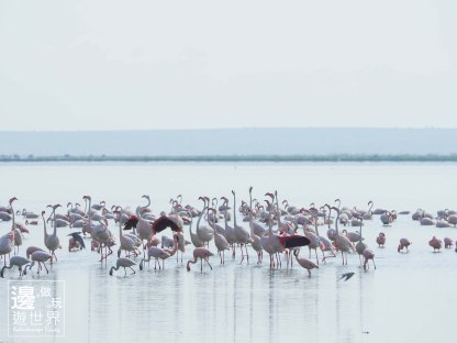 Must Travel Kenya Safari Holiday in Amboseli National Park with Mount Kilimanjaro Masai Flamingos