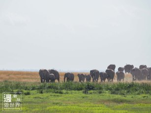 Must Travel Kenya Safari Holiday in Amboseli National Park with Mount Kilimanjaro Masai Elephant Herds