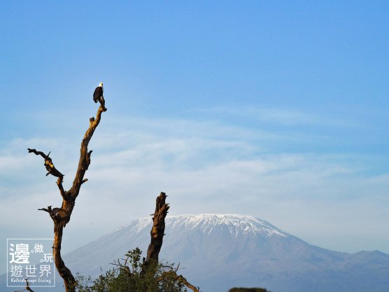 Must Travel Kenya Safari Holiday in Amboseli National Park with Mount Kilimanjaro Masai Eagle