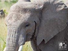Must Travel Kenya Safari Holiday in Amboseli National Park with Mount Kilimanjaro Masai Elephant