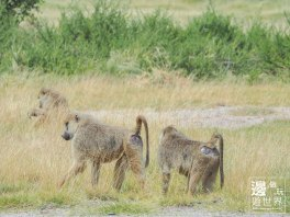 Must Travel Kenya Safari Holiday in Amboseli National Park with Mount Kilimanjaro Masai