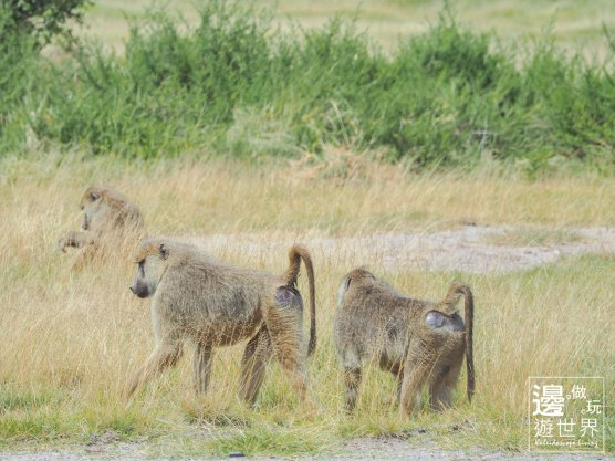 Must Travel Kenya Safari Holiday in Amboseli National Park with Mount Kilimanjaro Masai